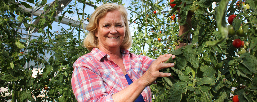 pingree_farm_tomatoes_1000